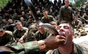 Soldados bebendo sangue de cobra