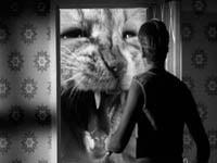 O Incrível Homem que Encolheu (1957)